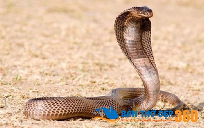 Bà bầu mơ thấy rắn hổ mang đánh con gì Trúng Đậm?