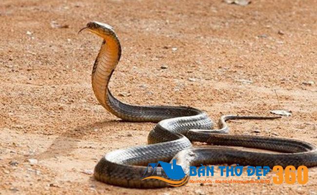 Mơ thấy rắn hổ mang ta nhắc tới những con số nào?